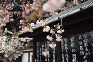 PEPP Học bổng toàn phần ngành kinh tế đại học Tsukuba, Nhật Bản