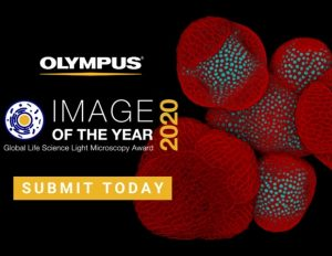 co-hoi-tham-gia-cuoc-thi-olympus-image-of-the-year-award-2020